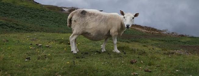 Wyjazd do Szkocji: północno-zachodnie Highlands i Isle of Skye